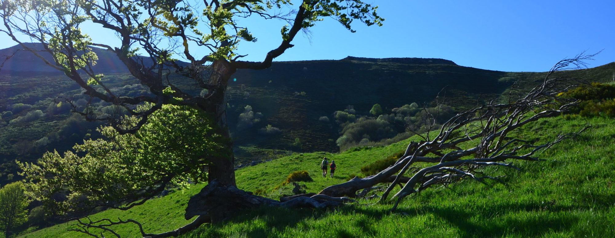 En chemin vers le plateau du Limon. Photo ©Alta Terra